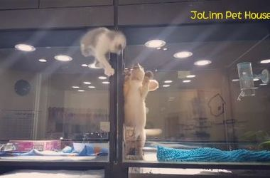 Одинокий котенок приложил неимоверные усилия, чтобы воссоединиться с другом (видео)