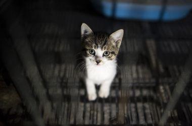 Ученые выяснили, как кошачьи