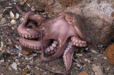 В Одессе на пляже обнаружили необычного морского жителя (фото)