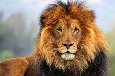 В зоопарке Львовской области лев расправился с пьяными визитерами