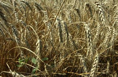 Украина побила рекорд по экспорту зерна