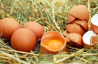 В Украине резко просело производство яиц