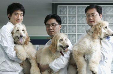 В Южной Корее клонировали 800 собак
