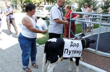 В приемной Путина фермеры оставили теленка