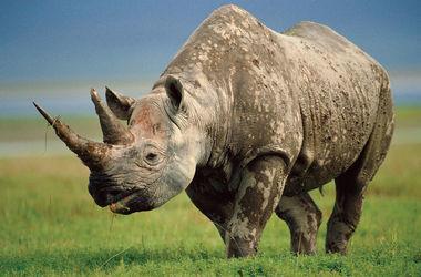 В Зимбабве 700 носорогам удалят рога