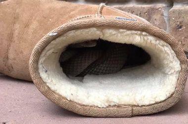 Австралийка нашла смертоносную змею в своих уггах (фото)
