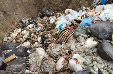Под Киевом нашли опасный могильник скота