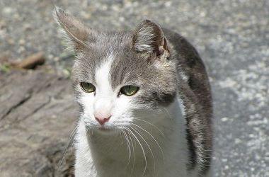 Пропавшую в Швейцарии кошку спустя год нашли в другой стране
