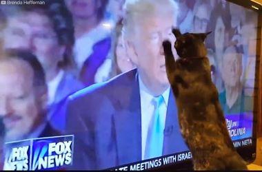 Странная реакция животных на Дональда Трампа: забавное видео (видео)