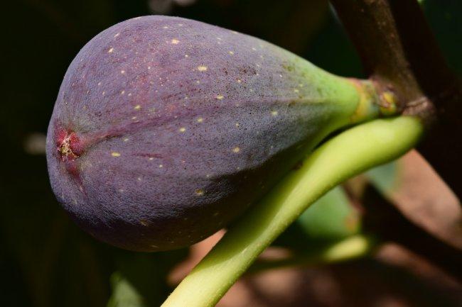Как вырастить ананасы и инжир на своем подоконнике