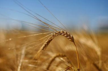 Украину подводят низкие цены на зерно