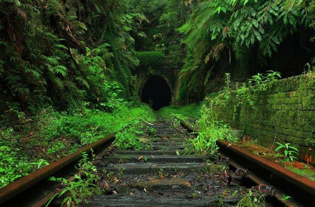 Тоннель светлячков в Австралии