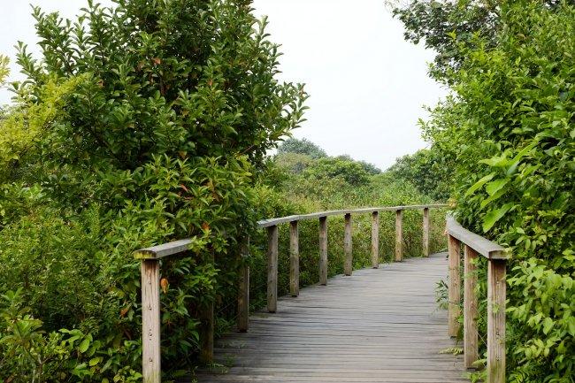 Парк водно-болотных угодий Гонконга