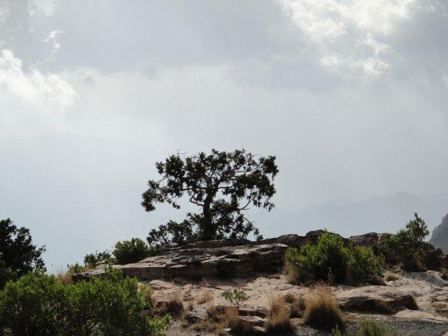 Национальный парк Асир