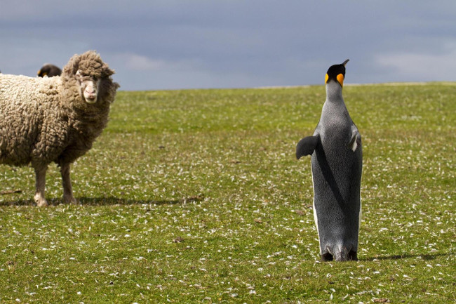 Фолклендские Мальвинские острова - едем за новыми ощущениями