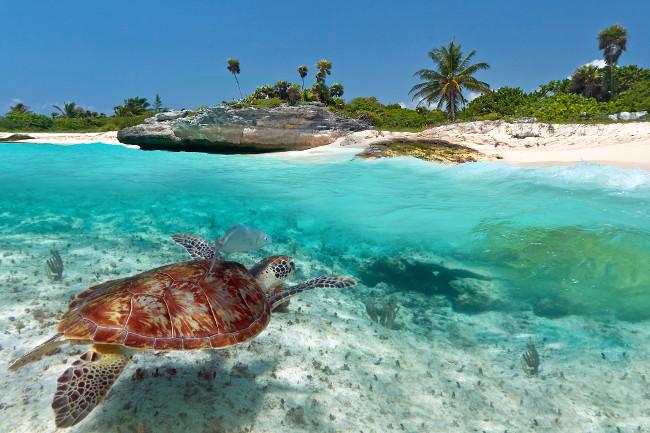 Отдых на море в Мексике действительно незабываем