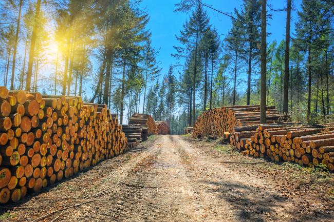 Выбираем станок для дерева: ленточнопильный, круглопильный, горбыльный, пилорама